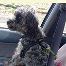 Dog Seat