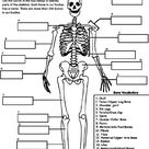 Human Skeleton on crayola.com