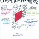 Serratus Posterior Inferior