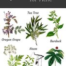 Herbs for Acne Treatment and Prevention