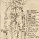 Anatomical Chart From