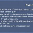 Radiological anatomy of kidney, ureter & bladder