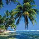 Palm Trees Beach