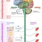What are the different body systems in human body and what are their functions?   Socratic
