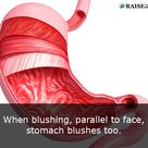 12 Interesting stomach facts: Human body facts - RaiseYourBrain