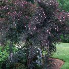 Farbenfrohe Büsche für Ihren Garten - 27 charmante Pflanzen für Sie