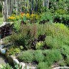 Kräutergarten anlegen: Die wichtigsten Tipps - DAS HAUS