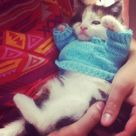 Baby Kittens
