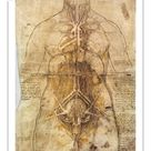 10 inch Photo. Leonardo Da Vinci: Anatomy