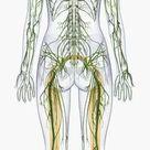 A1 Poster. Digital illustration of human nervous system
