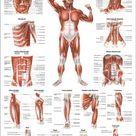 Tiefe Muskelschichten