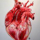 Realistic Human Heart by Lunacanan on DeviantArt