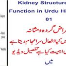 Kidney Structure and Function in Urdu Hindi Part 01