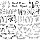 Big Set of Hand Drawn Herbs Clipart Leaves clip art Herbs   Etsy