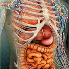 Jigsaw Puzzle. Perspective view of human body, whole organs and bones