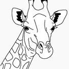 hoofd giraf