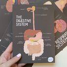 Anatomy Print: The Digestive System