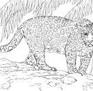 Jaguar Portrait coloring page | Free Printable Coloring Pages