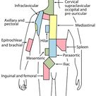 File:Lymph node regions.svg