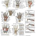Laminated Anatomy and Injuries of The Hand and Wrist Poster - Hand and Wrist Joint Anatomical Chart - 18
