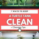 How to Keep a Turtle Tank Hygienic & Clean