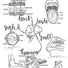 SCIENCE 3 cycles of coloring pages 5th edition   Etsy