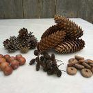 Cones and acorns set, Crafts supply set of cones and acorns