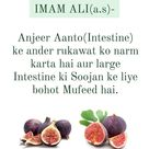 Imam Alia.s  Fig Softens the intestinal obstruction and is very beneficial for large intestine inflammation Follow tibb e islam for…