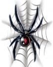 Black Widow On Web Tattoo