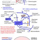 Head and Neck - Vessels - Arteries - Face