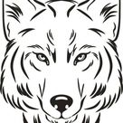 Cabeça Lobo Desenho Esboçado
