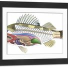 Large Framed Photo. Cross-section diagram of a bony fish