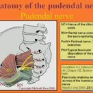 Pudendal and Other Nerve Damage - Posterior Femoral Cutaneous, Ileoinguinal and Obturator in the Transvaginal Mesh Patient