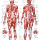 Medizinisches Poster,