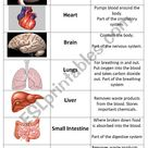Human Organs Card Sort - ESL worksheet by grainger1982