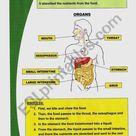 Basic digestive system   ESL worksheet by Mariola PdD