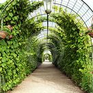 Vine arbor tunnel stock photo. Image of history, covered - 6338202