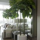 Milano Cylinder Small White – Ficus Lyrata (Fiddle Leaf Tree)