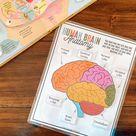 Human Brain Anatomy Printable Activity, Brain Puzzle, Brain Parts Matching, Homeschool Activity, Kids Science Game, Human Anatomy Education