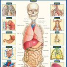 QuickStudy   Anatomy of the Organs Laminated Study Guide