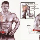 Exercícios para Ombros: Sequência completa para Hipertrofia
