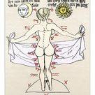 10 inch Photo. Medical zodiac, 15th century diagram