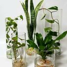 Hydroponics - Indoor Plants Doing Great in Water Only - Article on Thursd.