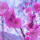 Spring 🌺🌺🌺