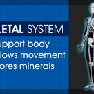 Functions of the Skeletal System You'd Certainly Want to Know