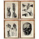 Set of 4 Prints, Da Vinci Dictionary Art Print Print, Da Vinci Art Print, Human Anatomy Poster, Anat