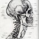 Anatomy For The Artist : Sarah Simblet : Free Download, Borrow, and Streaming : Internet Archive