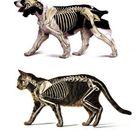 Cat Anatomy vs Dog Anatomy
