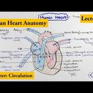 human heart Structure and Function   Chapter Circulation Video  2