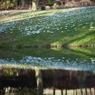 Garden Visit Snowdrop Season at Painswick Rococo Garden